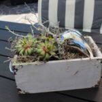 TD167 - Schublade aus Holz bepflanzt und dekoriert mit Sukkulenten, natürlichen Materialien und einem silberfarbigen Herz! Preis 24,90€ Größe ca. 23x12cm