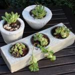 NB2 – Betonschalen als Blumentopf – mit Liebe von uns per Hand gefertigt! Großer Block mit drei Schalen 15,90€ – Töpfe in unterschiedlichen Ausführungen 9,90€ – Preise ohne Bepflanzung!
