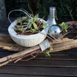 NB8 - Schwemmholz mit einer Betonschale zum bepflanzen! Natürlich dekoriert mit einer Edelstahlkugel! Preis 24,90€