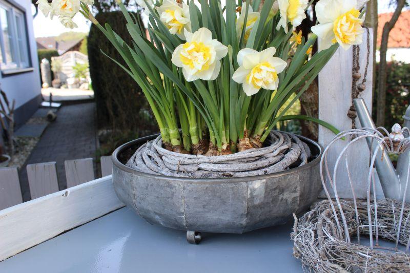 TD213 - Metallschale zum bepflanzen! Durchmesser 26cm Preis 13,90€ Durchmesser 31cm Preis 15,90€ Preis ohne Pflanzen!